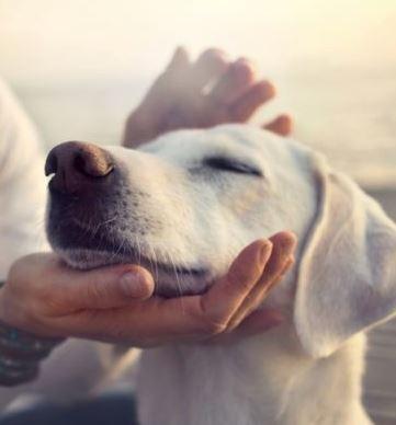 reiki en mascotas